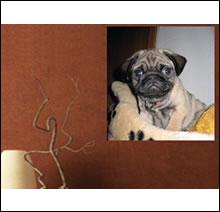 Wandtatoo schenken und selbst gestalten wandtatoos zum for Fotokissen selber machen